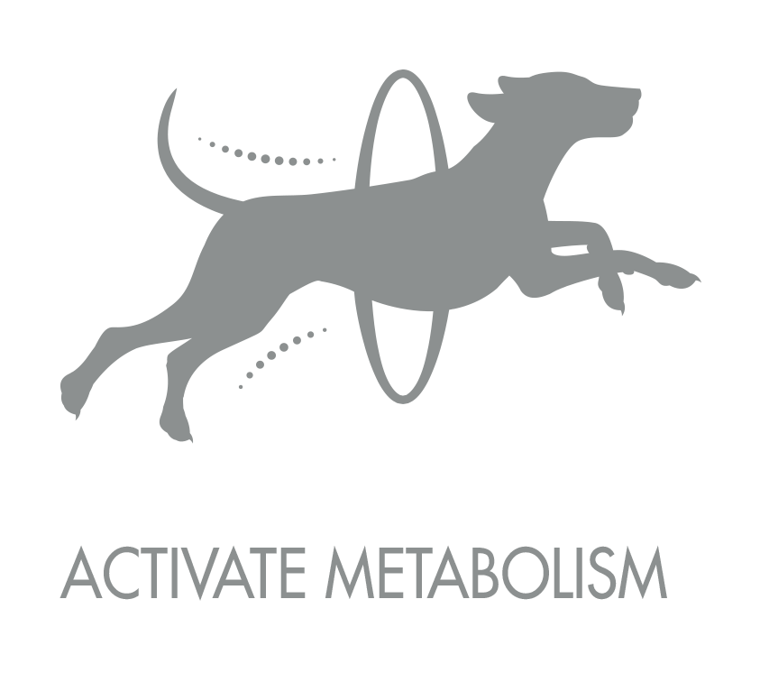 active_metabolism